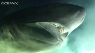 Chạm trán cá mập nguyên thuỷ siêu khổng lồ dưới biển sâu