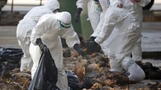 Xuất hiện 2 ổ dịch cúm A/H5N6 tại Bà Rịa-Vũng Tàu