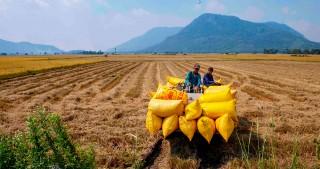 Nỗ lực tăng trưởng nông nghiệp