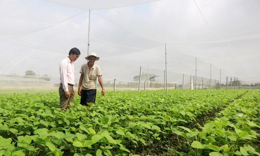 Trồng rau trong nhà lưới, hiệu quả kinh tế cao