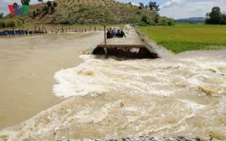 Vỡ đê Quảng Điền, Đắk Lắk, vùng lúa 1000 ha bị đe dọa nghiêm trọng