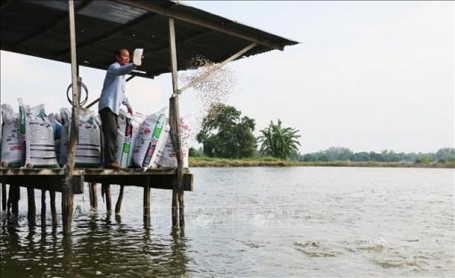 Đi lên từ gian khó, tỷ phú nông dân Tám Đậu hết lòng phụ giúp người nghèo