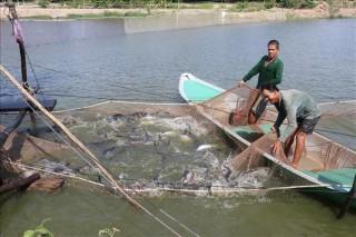 Giải pháp cho cá tra