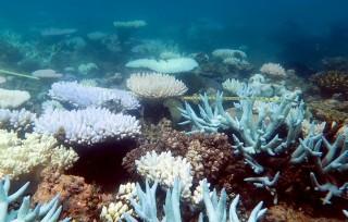 Vai trò mới của các rạn san hô trong hình thành bộ xương đá vôi CCA?