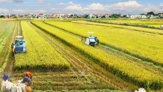 Ngành nông nghiệp - Trụ đỡ của nền kinh tế