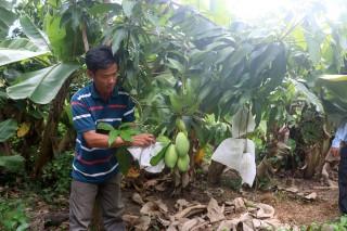 Hiệu quả chuyển đổi cơ cấu cây trồng