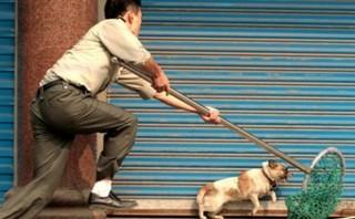 Triệt phá đường dây trộm chó 'cả trăm tấn', thu giữ súng bắn điện, bộ kích điện