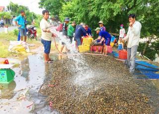 Bắt ôc bươu vàng trong mùa nước nổi