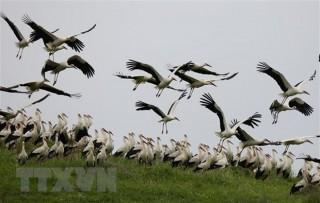 Thêm một bằng chứng cho thấy khủng hoảng sinh thái đang lan rộng