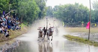 Đến chùa Rô xem hội đua bò!