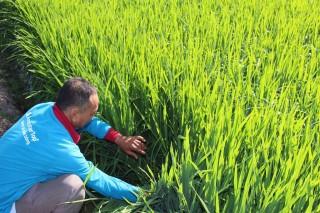 Ngành nông nghiệp tập trung hoàn thành nhiệm vụ