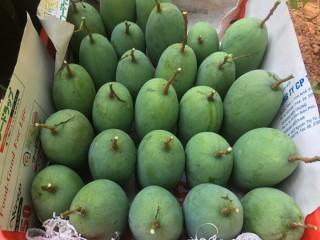 Xuất khẩu nông sản Sơn La đạt hơn 100 triệu USD trong 9 tháng