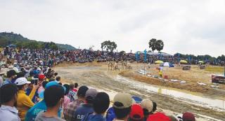 Nâng tầm Hội đua bò Bảy Núi