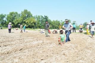 Cơ giới hóa đồng bộ cây đậu phộng