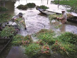 Tăng thu nhập dựa vào mùa nước nổi