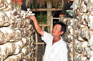 Nông dân xã An Hòa thi đua phát triển kinh tế