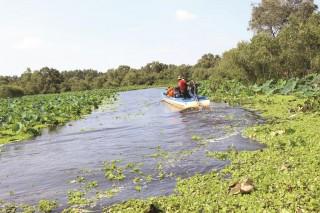 Thưởng ngoạn rừng tràm Trà Sư mùa nước nổi