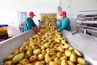 Nhiều tiềm năng xuất khẩu rau, hoa, quả