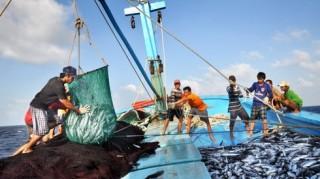 Việt Nam có gần 12.000 thuyền viên đi làm việc trên các tàu cá ở nước ngoài