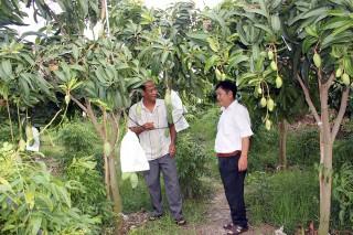 Diện tích cây ăn trái tăng mạnh