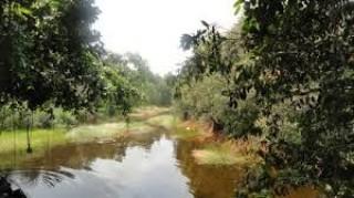Sẽ tạo cảnh quan rừng tràm Tân Tuyến kết hợp du lịch nông nghiệp sinh thái