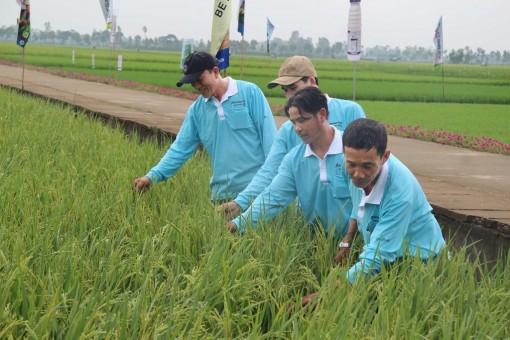 Tăng cường công tác khuyến nông