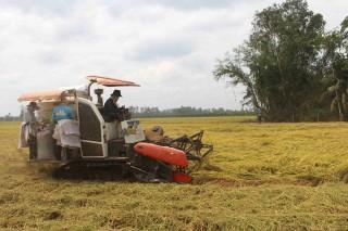 Năm 2020 sẽ sản xuất 3.000ha lúa Nhật