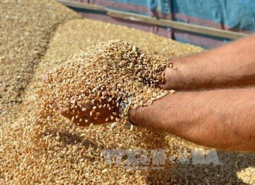 Giá lương thực thế giới tăng lần đầu tiên trong 5 tháng