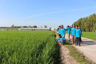 Quản lý dịch hại trên lúa
