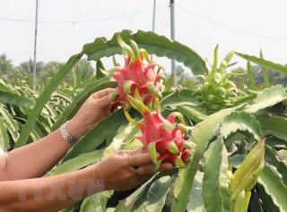 Việt Nam và Ital thúc đẩy hợp tác vùng, phát triển sản xuất nông sản