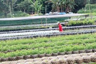 Chuyển dịch cơ cấu cây trồng ở huyện cù lao