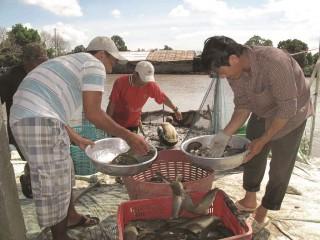 Thương lái vẫn là lực lượng chính trong tiêu thụ sản phẩm nông nghiệp