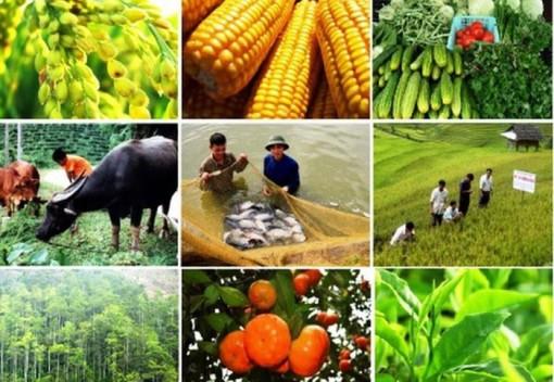Các địa phương phát triển chuỗi liên kết, tiêu thụ sản phẩm nông nghiệp