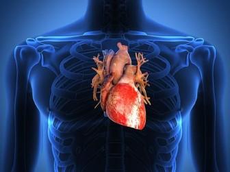 Vì sao những người cao lớn phải đặc biệt chăm sóc tim?