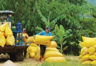 Phát triển nông nghiệp ở huyện miền núi