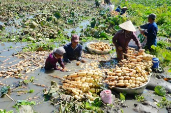 Hội Nông dân phường Châu Phú B giúp hội viên phát triển kinh tế
