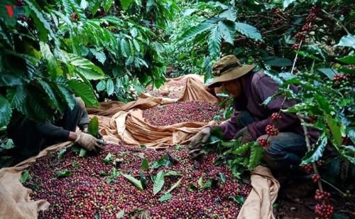 Nông sản Việt Nam cần nâng cao năng lực chế biến, tiếp cận thị trường