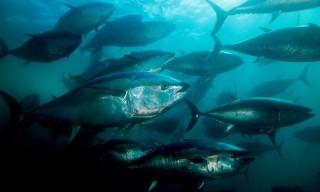 Các đại dương cạn kiệt oxy với tốc độ chưa từng thấy