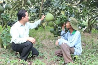 Nhà vườn chuẩn bị trái cây cho vụ Tết