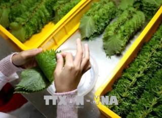 Xuất khẩu rau quả tháng 11/2019 giảm nhẹ