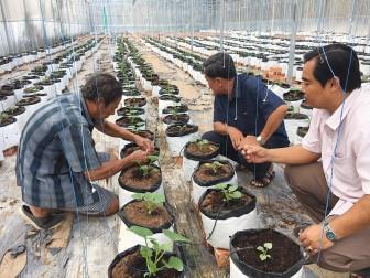 Ứng dụng công nghệ cao trong sản xuất nông nghiệp ở Long Xuyên