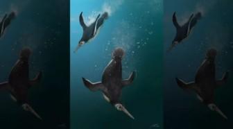 Bí ẩn sinh vật ra đời vào ngày thiên thạch tiêu diệt hết khủng long