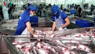 Cá da trơn Việt Nam được hoan nghênh tại thị trường Mỹ