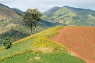 Mê hoặc mùa hoa dã quỳ núi lửa Chư Đăng Ya