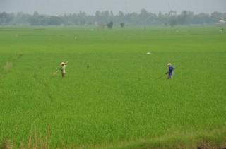 Đẩy nhanh tiến độ cấp đổi giấy chứng nhận quyền sử dụng đất nông nghiệp