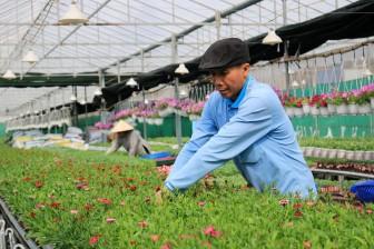 Thăm vườn hoa công nghệ cao