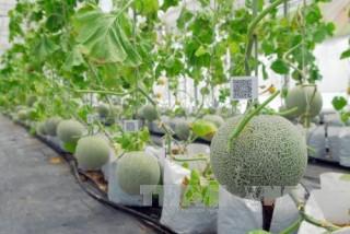 Tiêu chí xác định dự án sản xuất kinh doanh ứng dụng công nghệ cao trong nông nghiệp