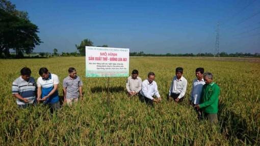 Hội thảo đầu bờ, giới thiệu giống lúa AG1