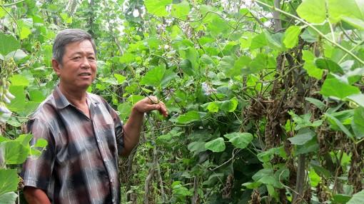 Xã Phước Hưng tập trung chuyển đổi cây trồng
