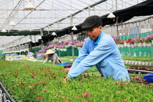 Ứng dụng công nghệ cao trong việc trồng, ươm hoa giống